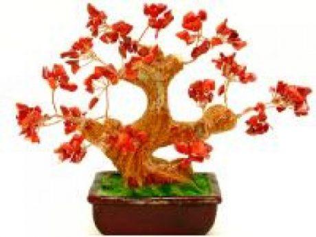 Bonsai coral rojo