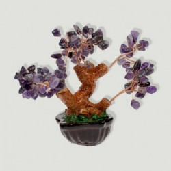 Bonsai amatista