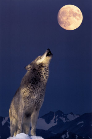 Luna llena de Enero: la luna llena del lobo