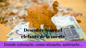 descubre elefante de la suerte